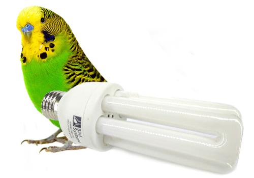 Освещение для птиц