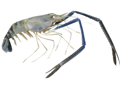 Пресноводные креветки, моллюски, раки и крабы