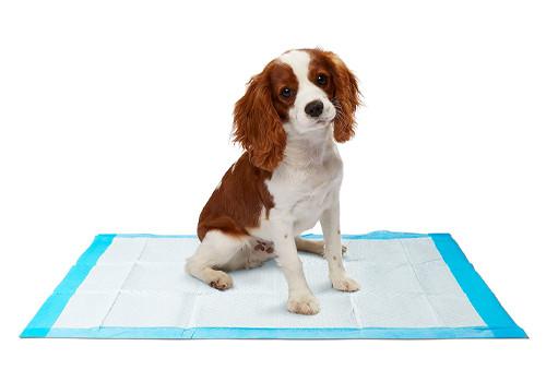 Пеленки, подстилки и подгузники для собак