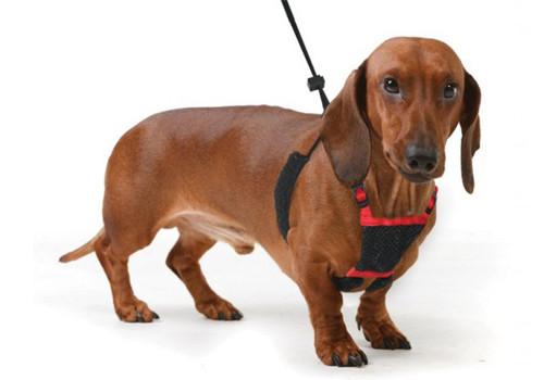 Амуниция для собак