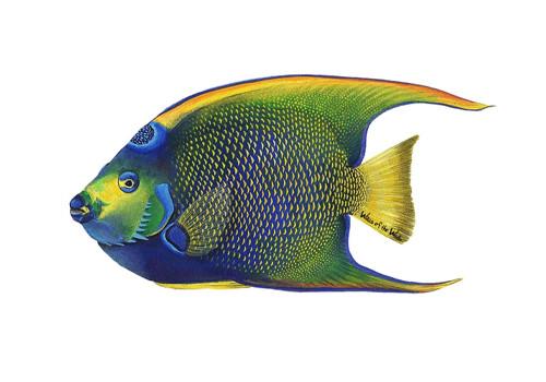 Морские аквариумные рыбы