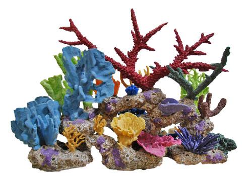 Натуральные кораллы и ракушки