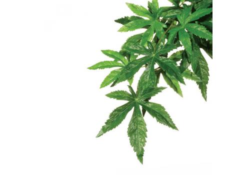 Растение для террариума Exo Terra РT3042 Abutilon, 55см