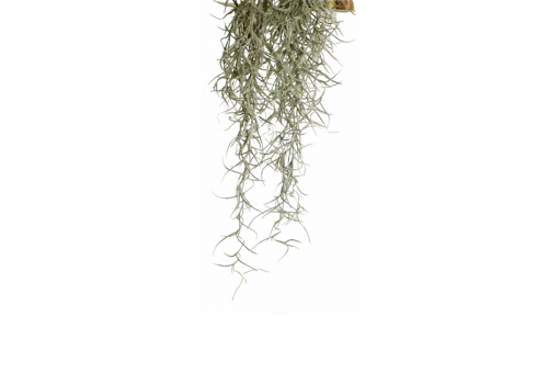 Растение для террариума Exo Terra РT3091 Spanish Moss, 75см