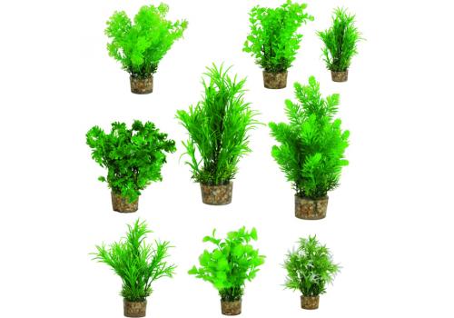 Растения в грунте Т1 Small
