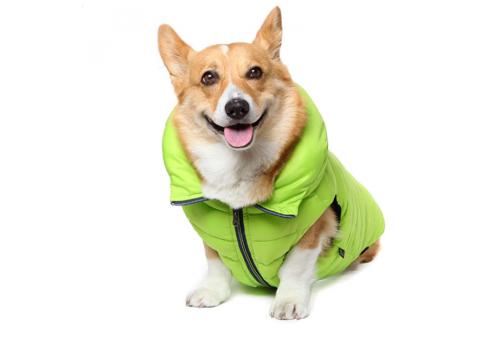 """Куртка-пуховик """"Шамони"""" Puppy Angel 203 PA-OW, лайм, размер S"""